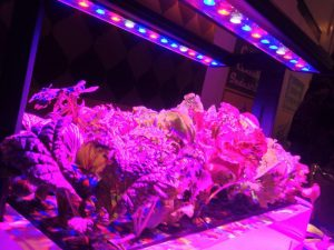Can I use normal led lights to grow plants indoors?
